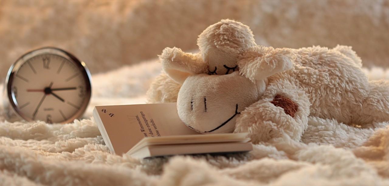 勉強しながら眠りについた羊